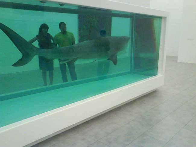 The Art Curator for Kids - 10 Awesome Sharks in Art for Shark Week - Damien Hirst, The Physical Impossibility of Death in the Mind of Someone Living, 1991, Photo Credit-Agent001