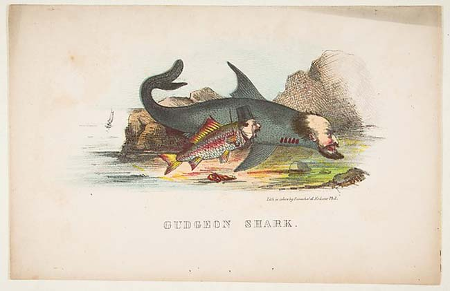 The Art Curator for Kids - 10 Awesome Sharks in Art for Shark Week - Henry Louis Stephens, Gudgeon and Shark, from The Comic Natural History of the Human Race, 1851