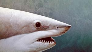 The Art Curator for Kids - 10 Awesome Sharks in Art for Shark Week - Richard Ellis, Great White Shark Portrait