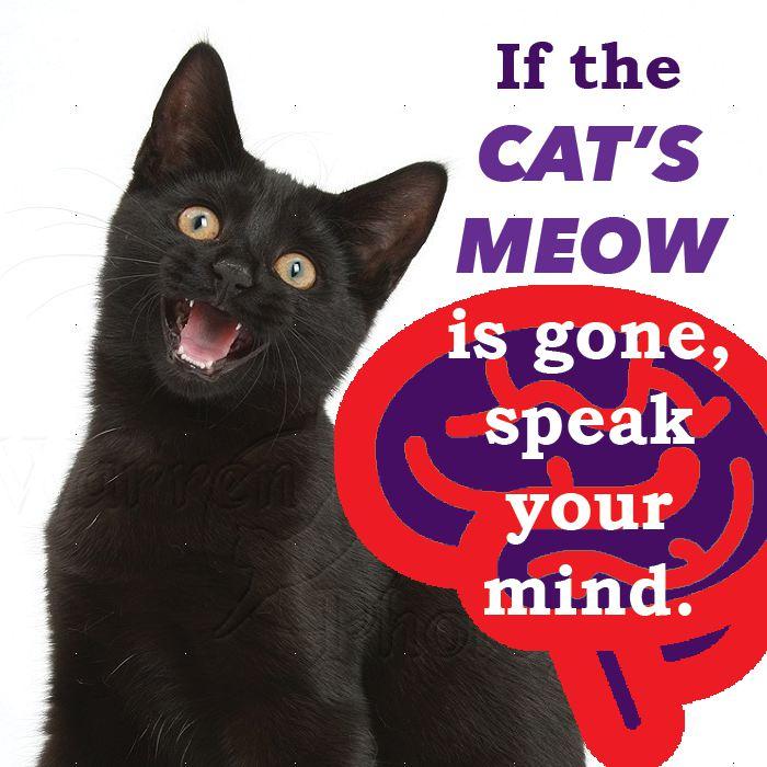 cat proverb