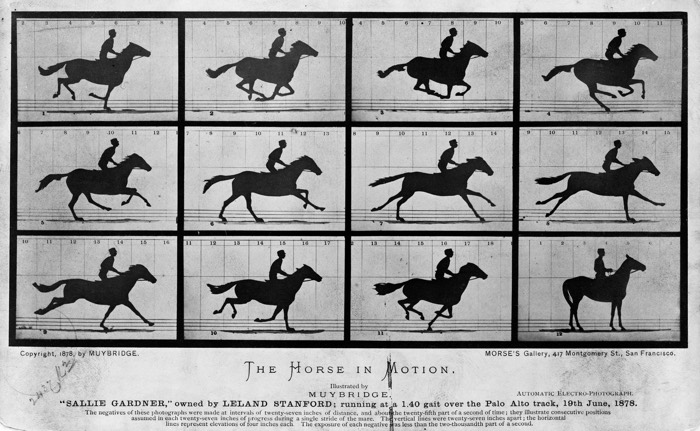 Eadweard Muybridge Horse in Motion 2 - Art Class Curator